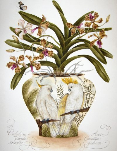 Cockatoos with Vanda Orchid 2008 - SOLD