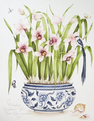 Cymbidium with Pintailed Wydah 2013 - SOLD