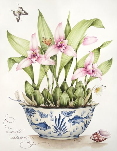 Lycaste Orchid 2015 - SOLD